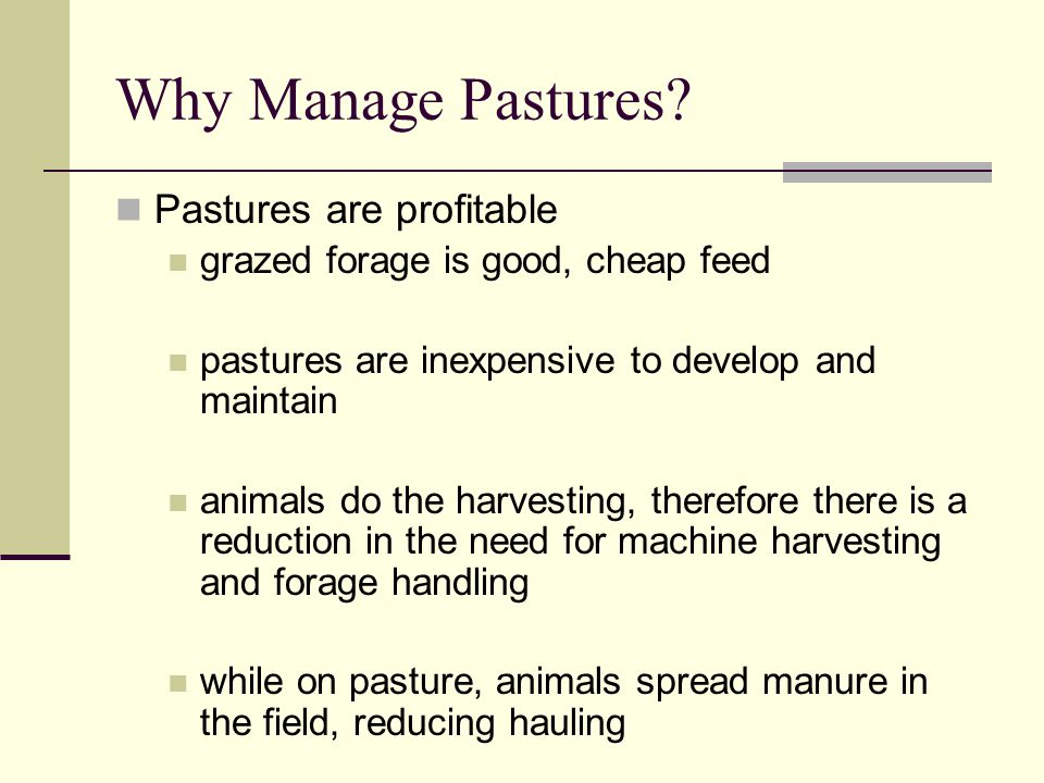Why Manage Pastures.