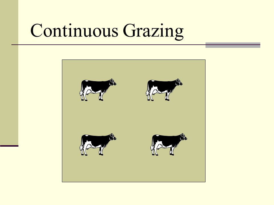 Continuous Grazing