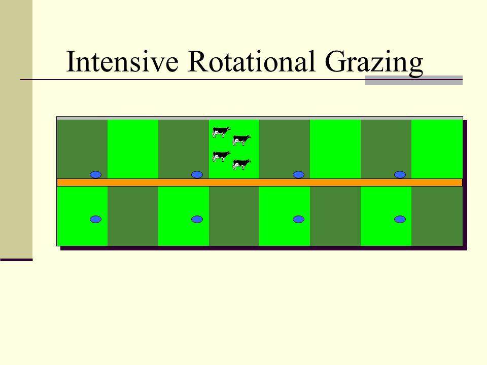 Intensive Rotational Grazing