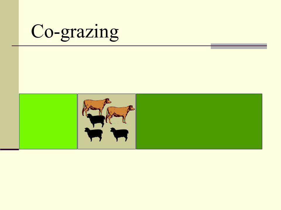 Co-grazing