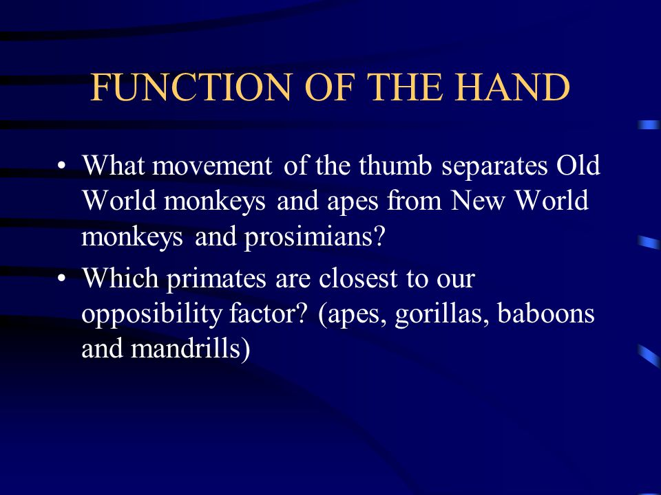 FUNCTION OF THE HAND Opposibility index = total length of thumb x 100/total length of index finger A low index denotes a long first finger and a short thumb, in primates the mean values are between 40 and 65.