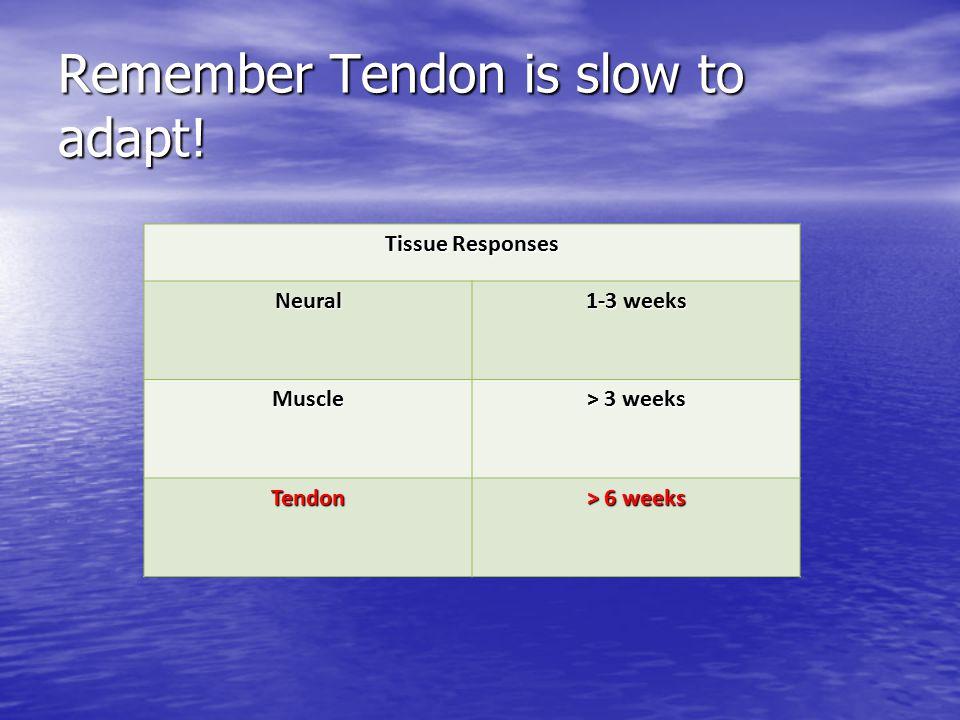 Remember Tendon is slow to adapt! Tissue Responses Neural 1-3 weeks Muscle > 3 weeks Tendon > 6 weeks