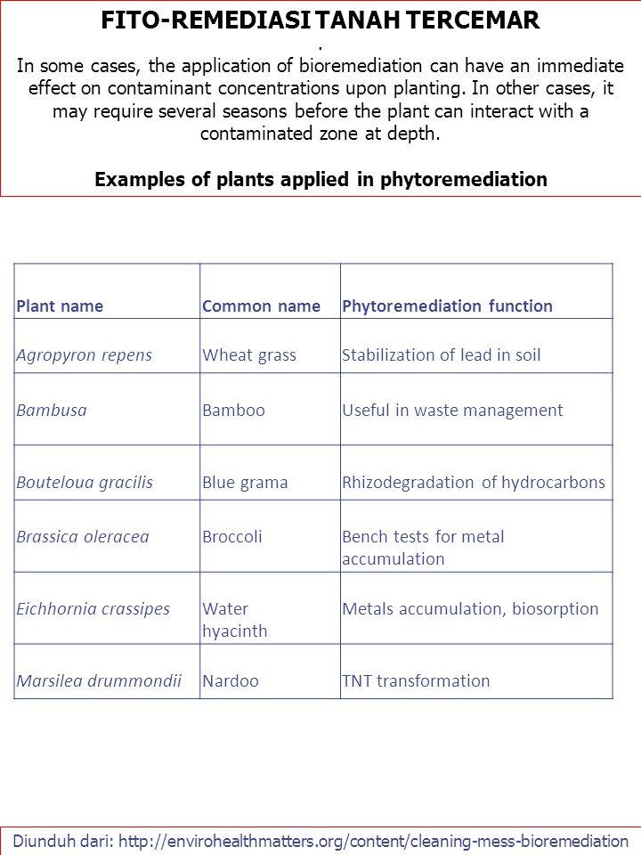Diunduh dari: http://envirohealthmatters.org/content/cleaning-mess-bioremediation FITO-REMEDIASI TANAH TERCEMAR. In some cases, the application of bio