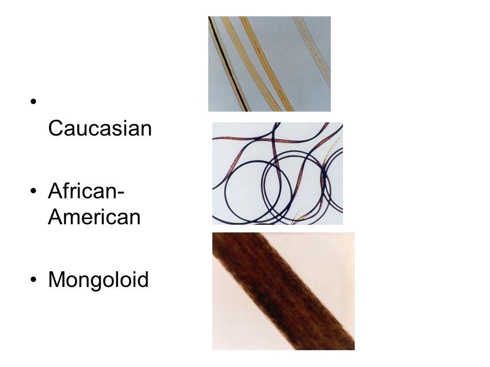 Caucasian African- American Mongoloid