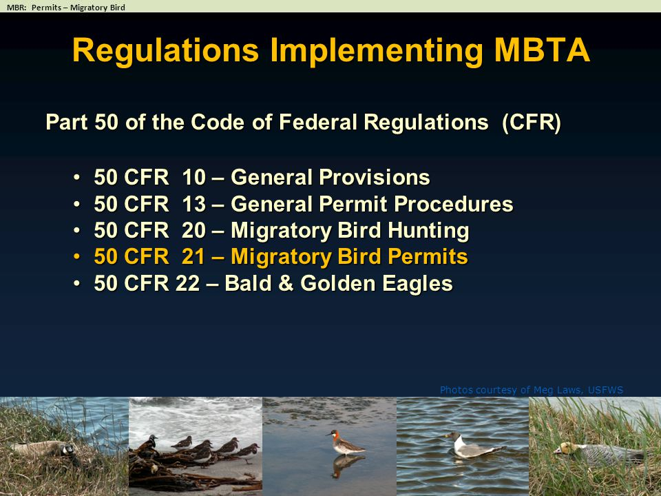 Photos courtesy of Meg Laws, USFWS Regulations Implementing MBTA Part 50 of the Code of Federal Regulations (CFR) 50 CFR 10 – General Provisions50 CFR