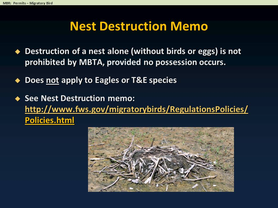  Destruction of a nest alone (without birds or eggs) is not prohibited by MBTA, no possession occurs.  Destruction of a nest alone (without birds or