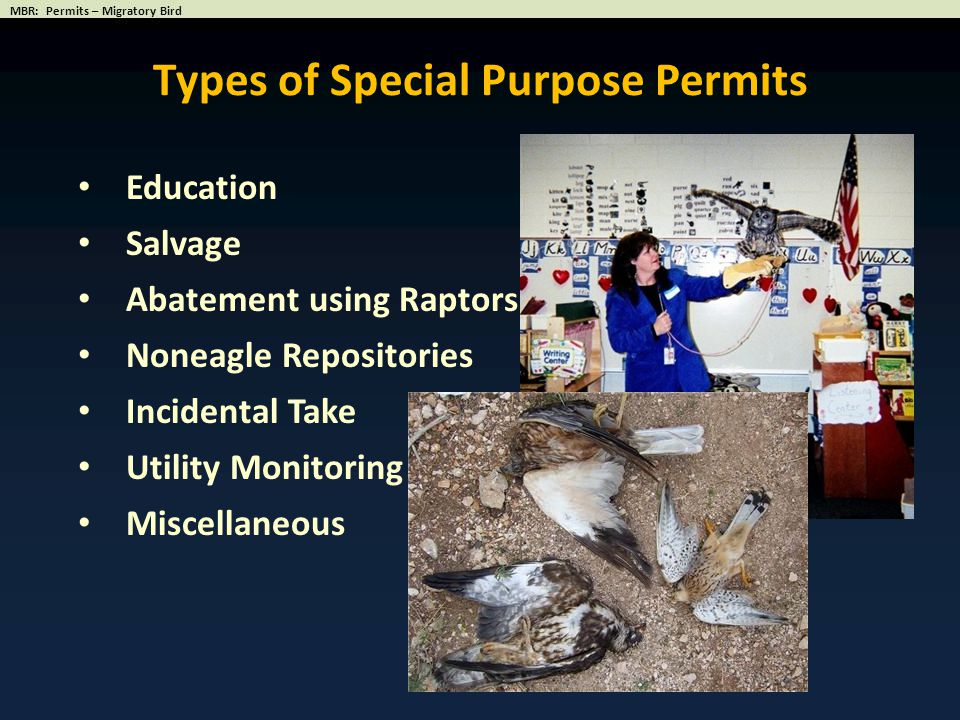 Education Salvage Abatement using Raptors Noneagle Repositories Incidental Take Utility Monitoring Miscellaneous Types of Special Purpose Permits