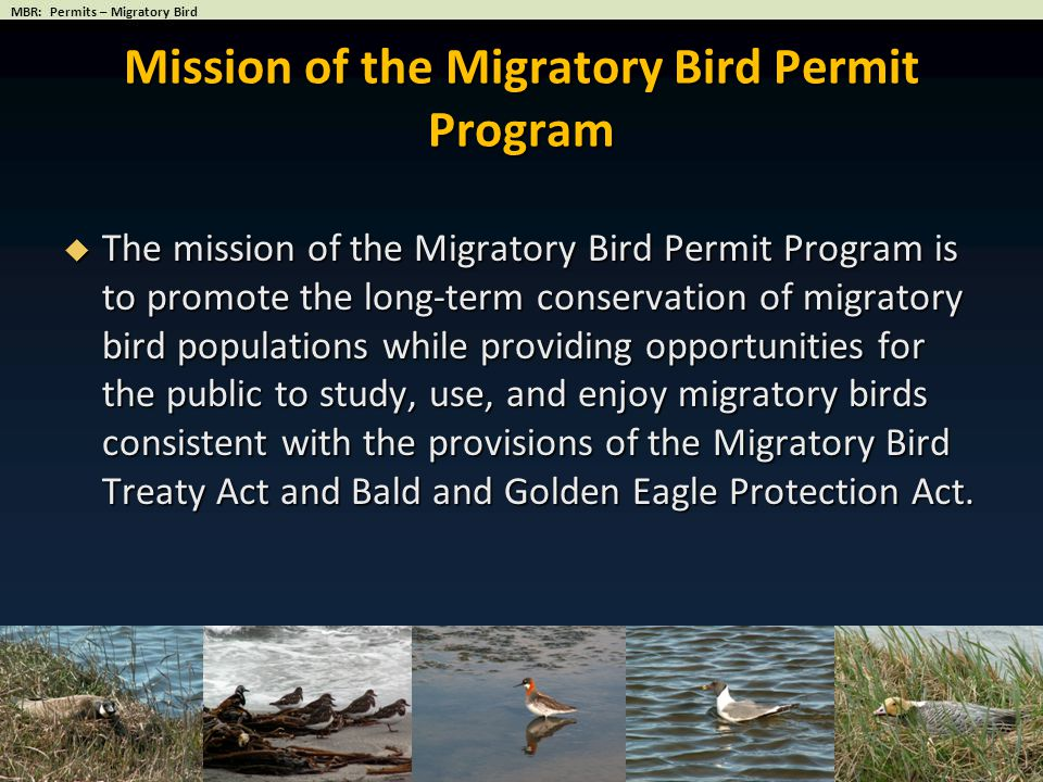Conservation of Migratory Bird Species National Consistency in Administration Minimize Regulatory Burden on Staff and Public Migratory Bird Permit Program Goals