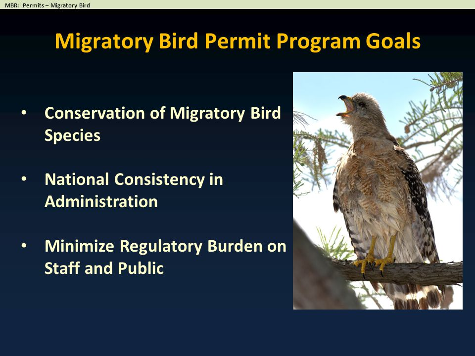 Conservation of Migratory Bird Species National Consistency in Administration Minimize Regulatory Burden on Staff and Public Migratory Bird Permit Pro