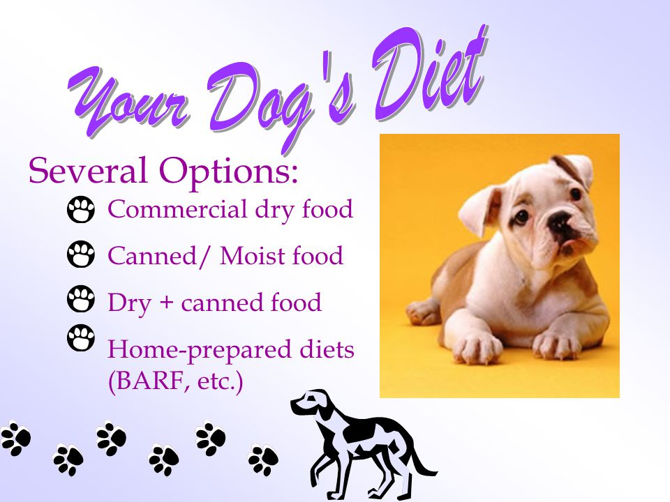 Several Options: Commercial dry food Canned/ Moist food Dry + canned food Home-prepared diets (BARF, etc.)