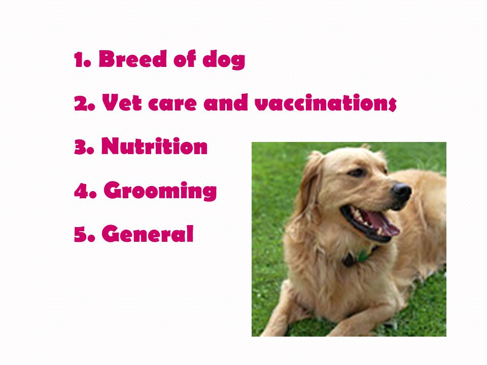 1. Breed of dog 2. Vet care and vaccinations 3. Nutrition 4. Grooming 5. General