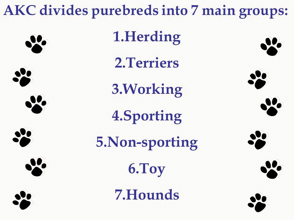 Herding  Ex: Border collie, Australian shepherd, Corgi, etc.