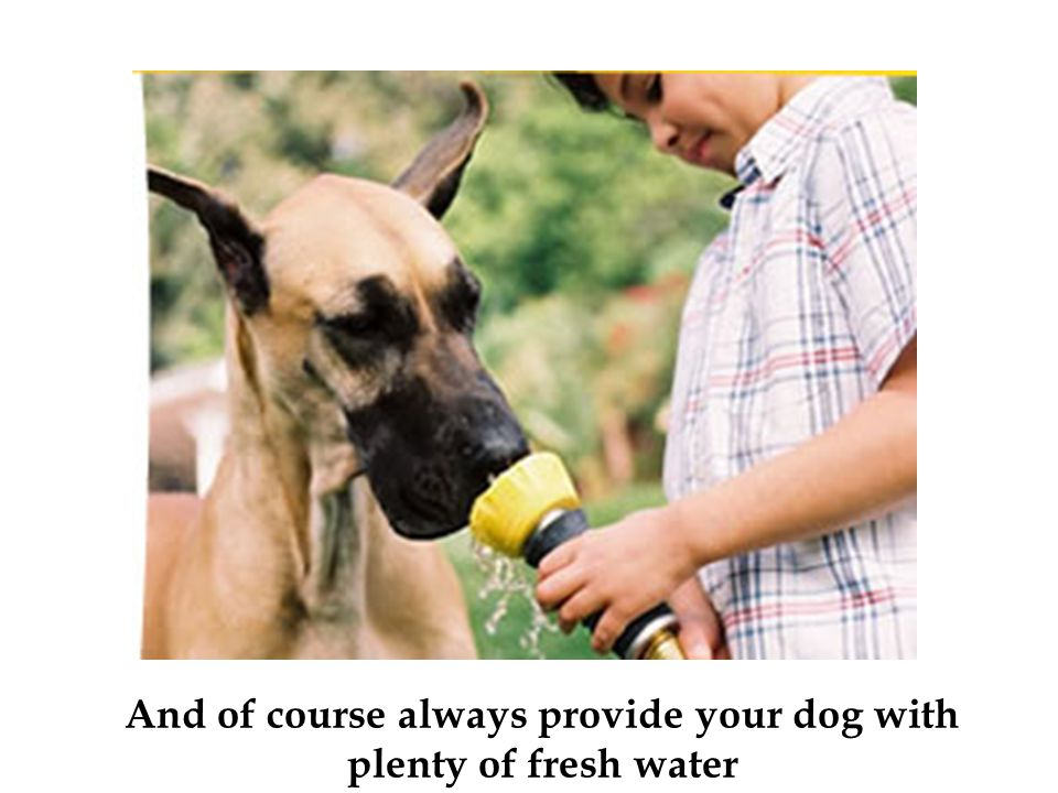 And of course always provide your dog with plenty of fresh water