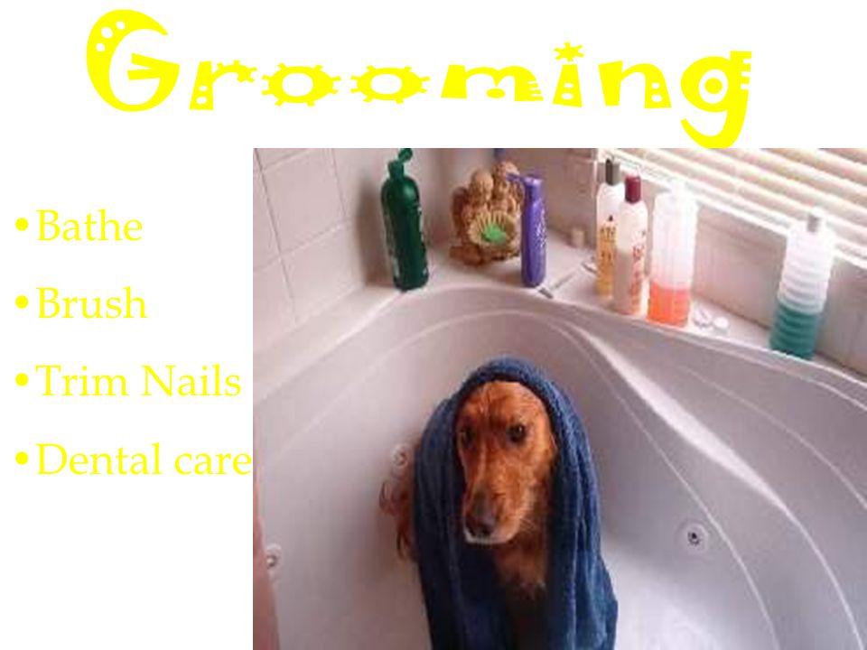 Bathe Brush Trim Nails Dental care