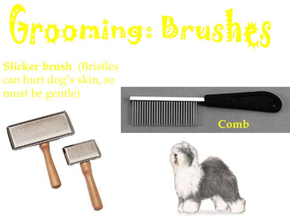 Slicker brush (Bristles can hurt dog's skin, so must be gentle) Comb
