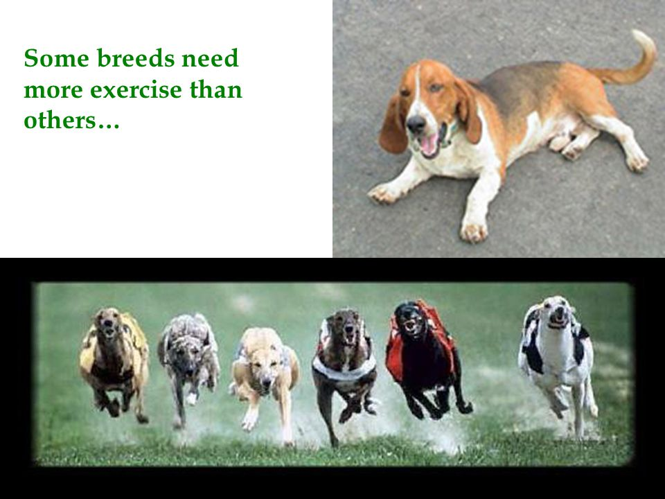 Some breeds need more exercise than others…