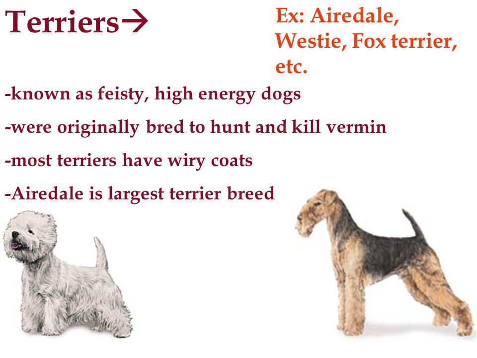 Slides 4-10 http://www.akc.org/breeds/recbreeds/ Slide 11 http://www.petfinder.com WORKS CITED Slide 12 http://www.cutebabyanimals.com/ScaredoftheVet.html Slide 14 http://www.valleyvet.com/ct_detail.html?PGGUID=30e07775-7b6a-11d5-a192- 00b0d0204ae5