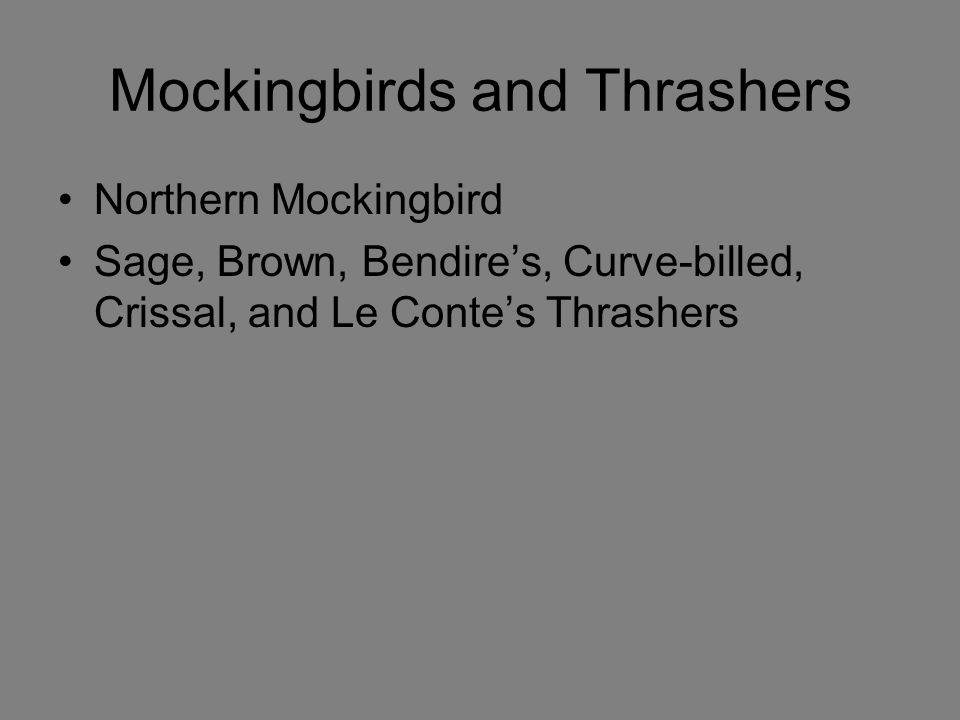 Mockingbirds and Thrashers Northern Mockingbird Sage, Brown, Bendire's, Curve-billed, Crissal, and Le Conte's Thrashers
