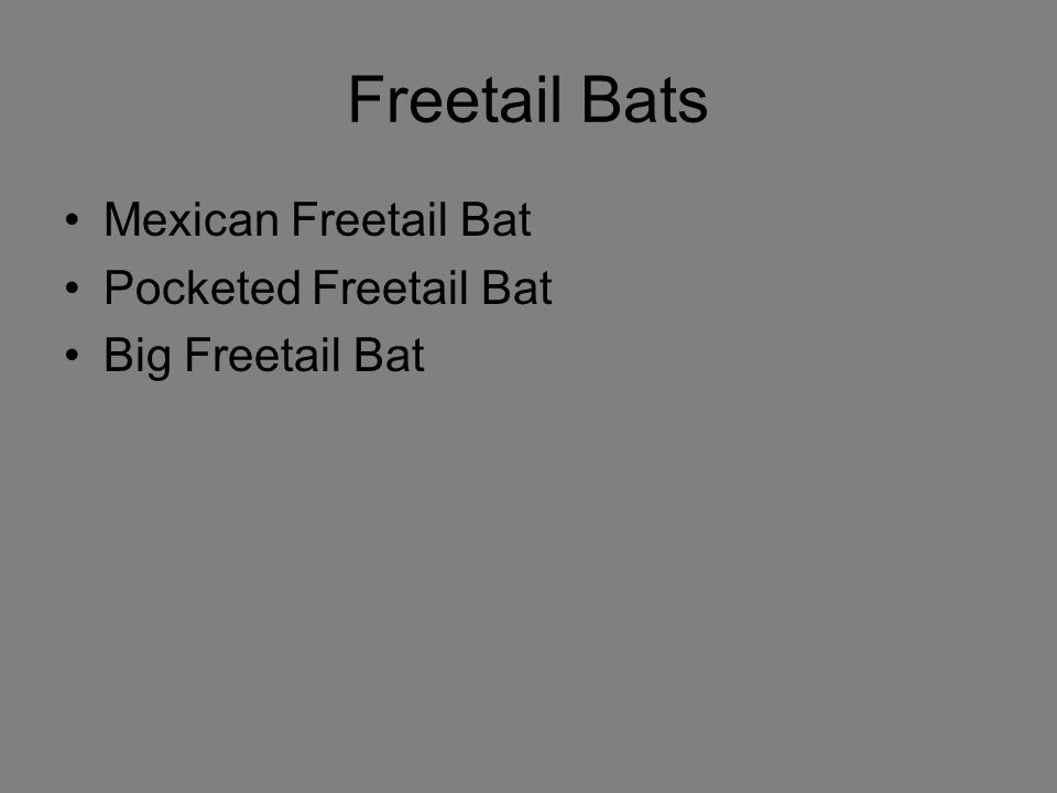 Freetail Bats Mexican Freetail Bat Pocketed Freetail Bat Big Freetail Bat