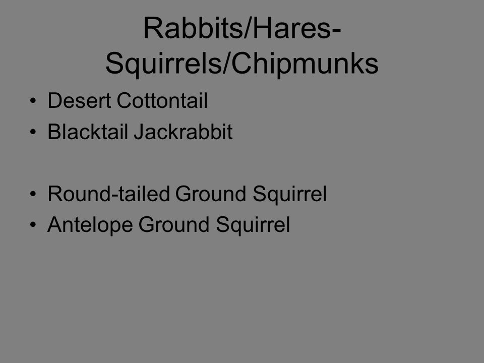 Rabbits/Hares- Squirrels/Chipmunks Desert Cottontail Blacktail Jackrabbit Round-tailed Ground Squirrel Antelope Ground Squirrel