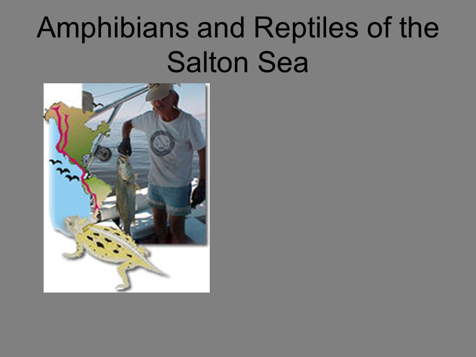 Amphibians and Reptiles of the Salton Sea
