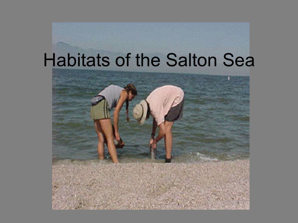 Habitats of the Salton Sea