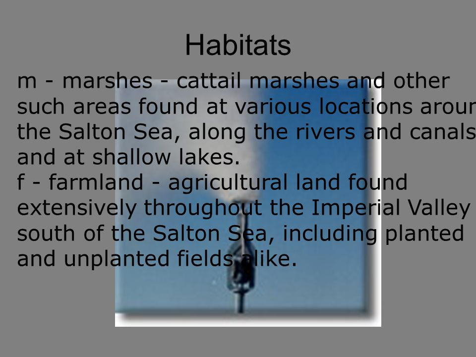 Habitats m - marshes - cattail marshes and other such areas found at various locations around the Salton Sea, along the rivers and canals, and at shallow lakes.