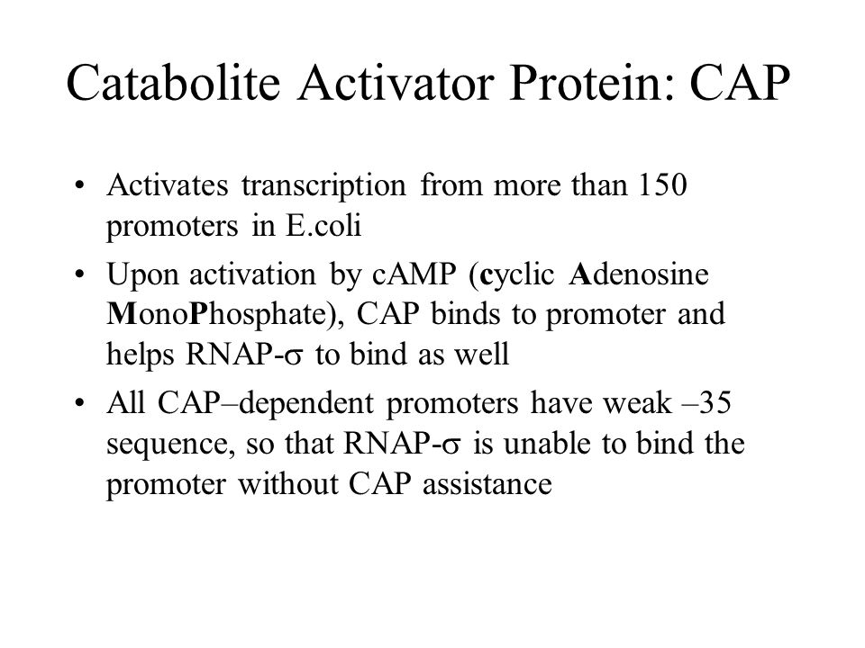 Catabolite Activator Protein: CAP Activates transcription from more than 150 promoters in E.coli Upon activation by cAMP (cyclic Adenosine MonoPhosphate), CAP binds to promoter and helps RNAP-  to bind as well All CAP–dependent promoters have weak –35 sequence, so that RNAP-  is unable to bind the promoter without CAP assistance