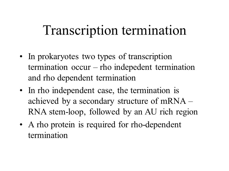 Transcription termination In prokaryotes two types of transcription termination occur – rho indepedent termination and rho dependent termination In rho independent case, the termination is achieved by a secondary structure of mRNA – RNA stem-loop, followed by an AU rich region A rho protein is required for rho-dependent termination