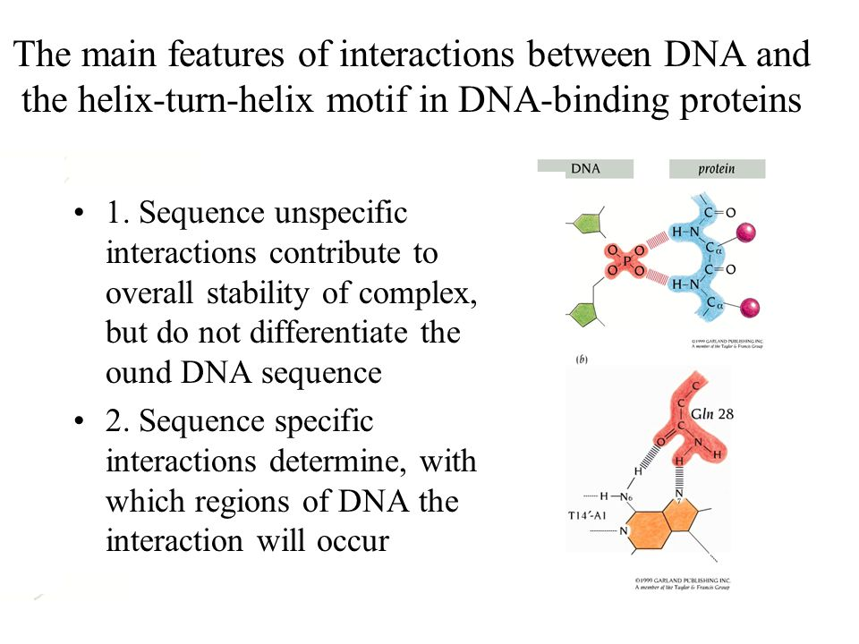 The main features of interactions between DNA and the helix-turn-helix motif in DNA-binding proteins 1.
