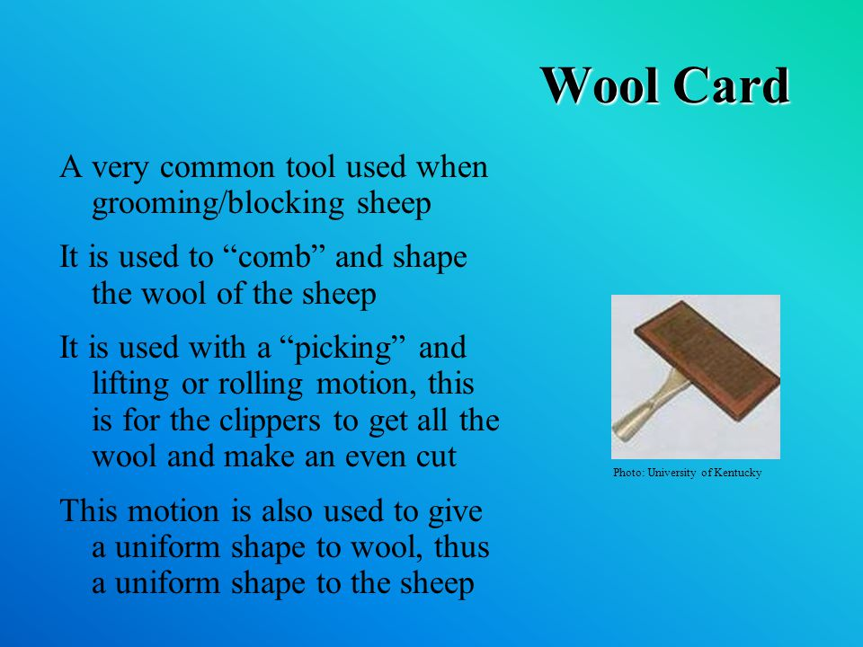 Wool Card A very common tool used when grooming/blocking sheep It is used to comb and shape the wool of the sheep It is used with a picking and lifting or rolling motion, this is for the clippers to get all the wool and make an even cut This motion is also used to give a uniform shape to wool, thus a uniform shape to the sheep Photo: University of Kentucky