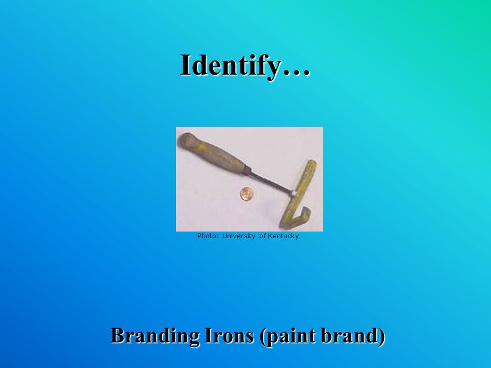 Identify… Branding Irons (paint brand) Photo: University of Kentucky