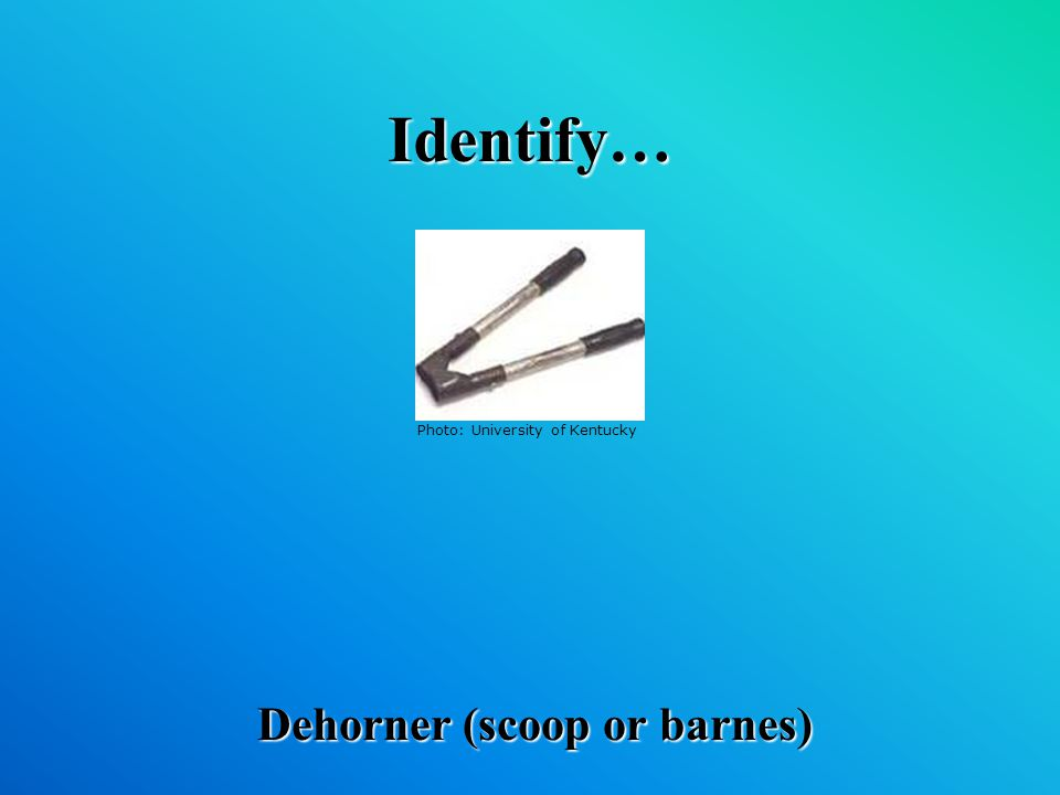 Identify… Dehorner (scoop or barnes) Photo: University of Kentucky