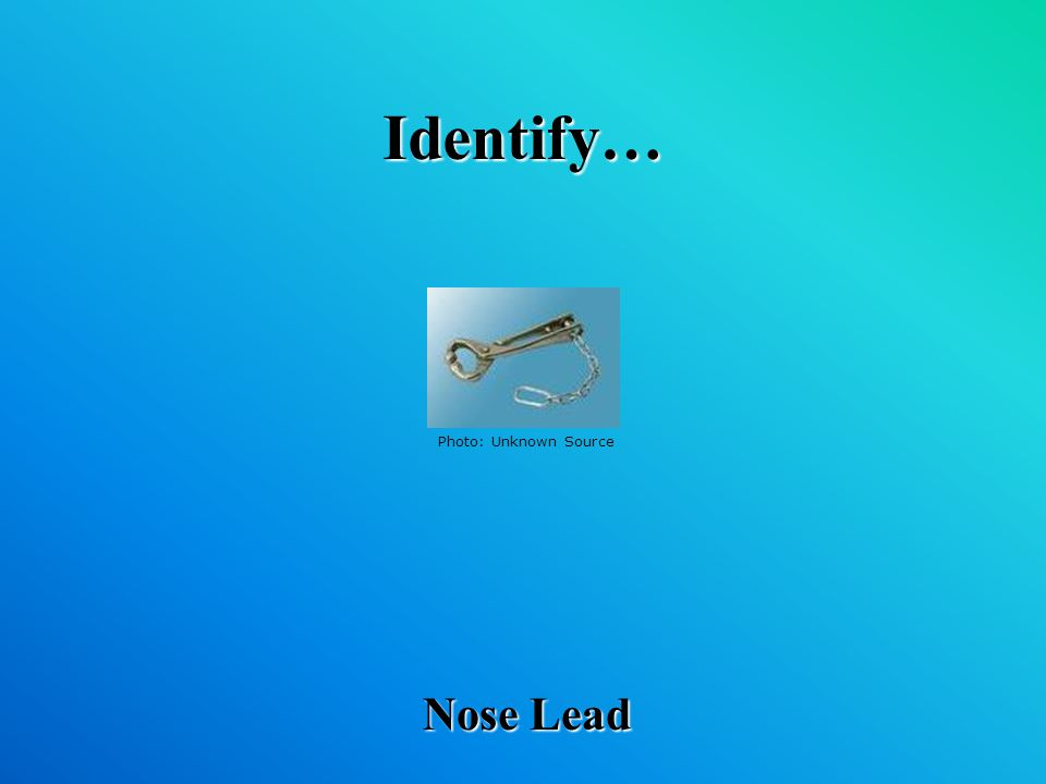 Identify… Nose Lead Photo: Unknown Source