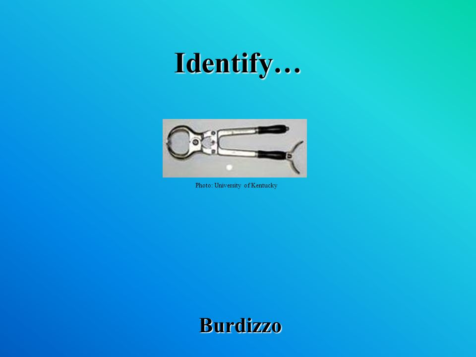 Identify… Burdizzo Photo: University of Kentucky