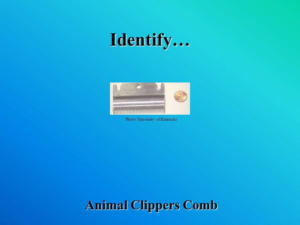 Identify… Animal Clippers Comb Photo: University of Kentucky