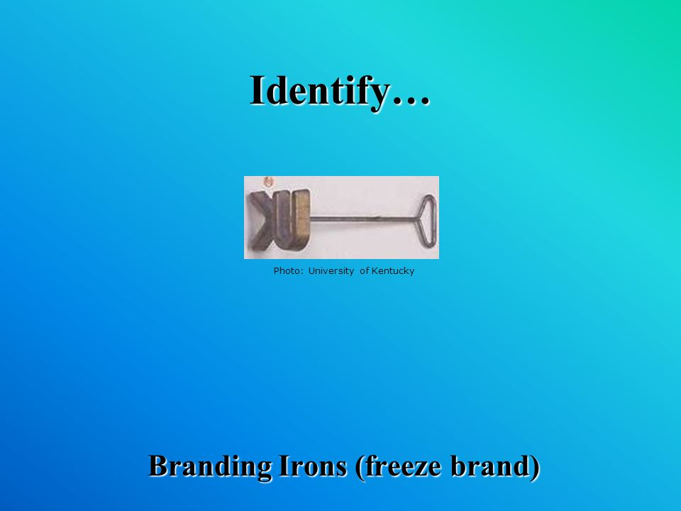 Identify… Branding Irons (freeze brand) Photo: University of Kentucky