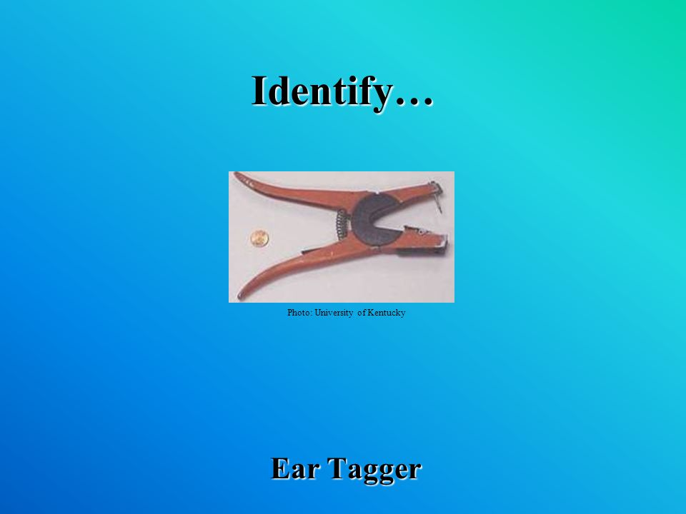 Identify… Ear Tagger Photo: University of Kentucky
