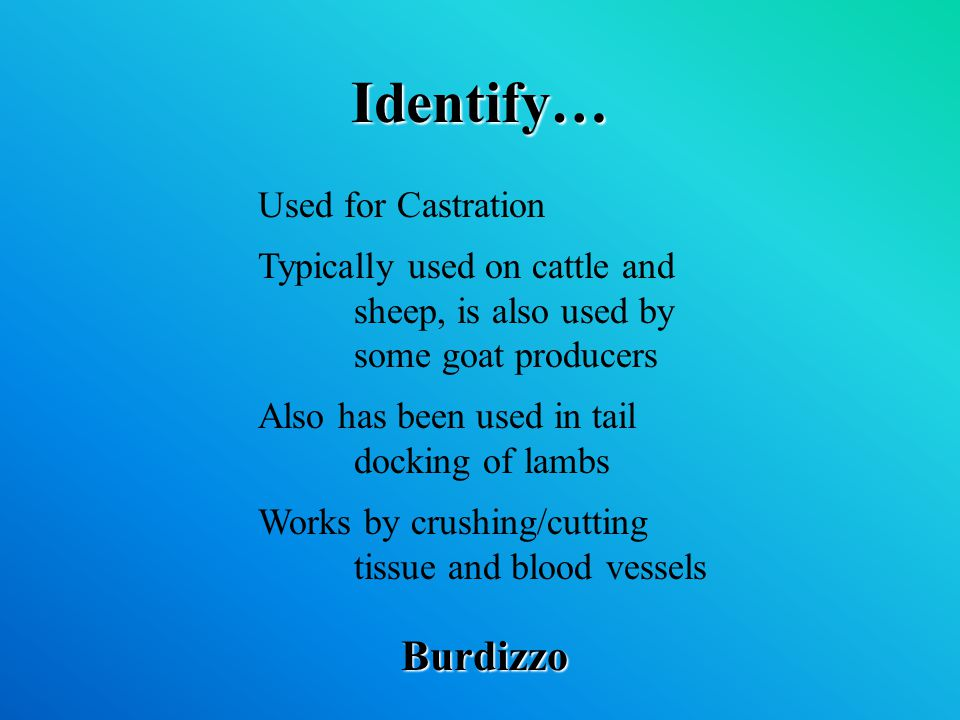 Identify… Burdizzo Used for Castration Typically used on cattle and sheep, is also used by some goat producers Also has been used in tail docking of lambs Works by crushing/cutting tissue and blood vessels