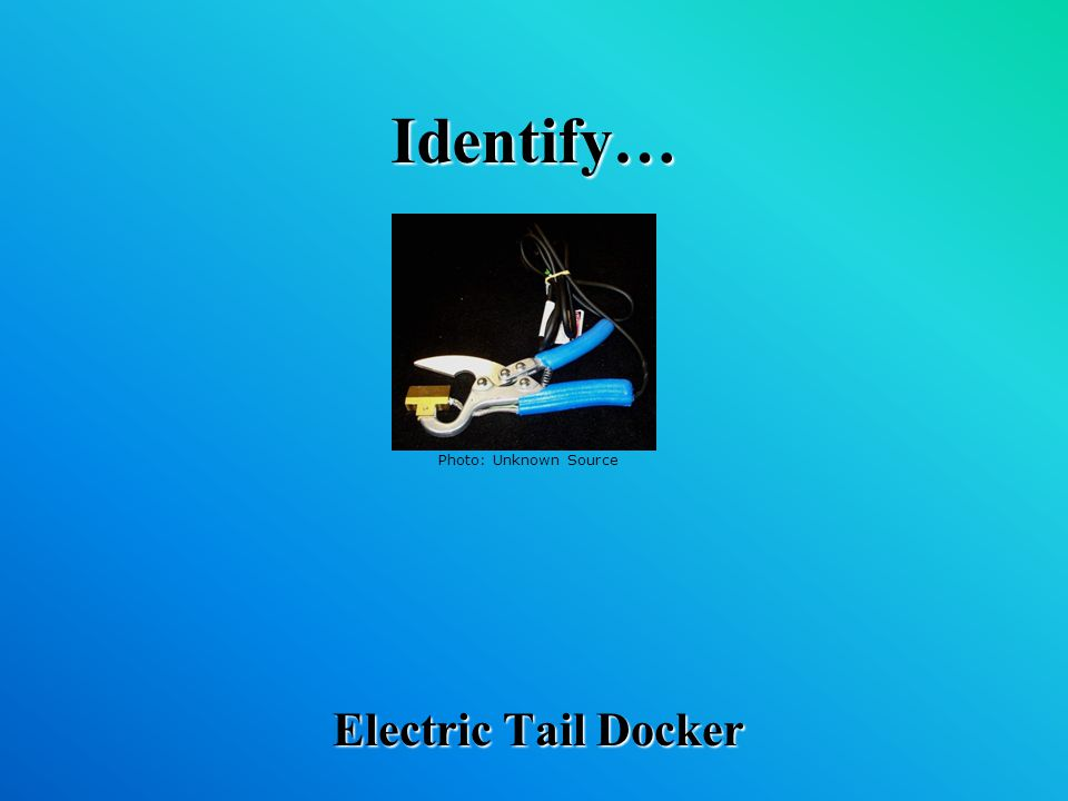 Identify… Electric Tail Docker Photo: Unknown Source