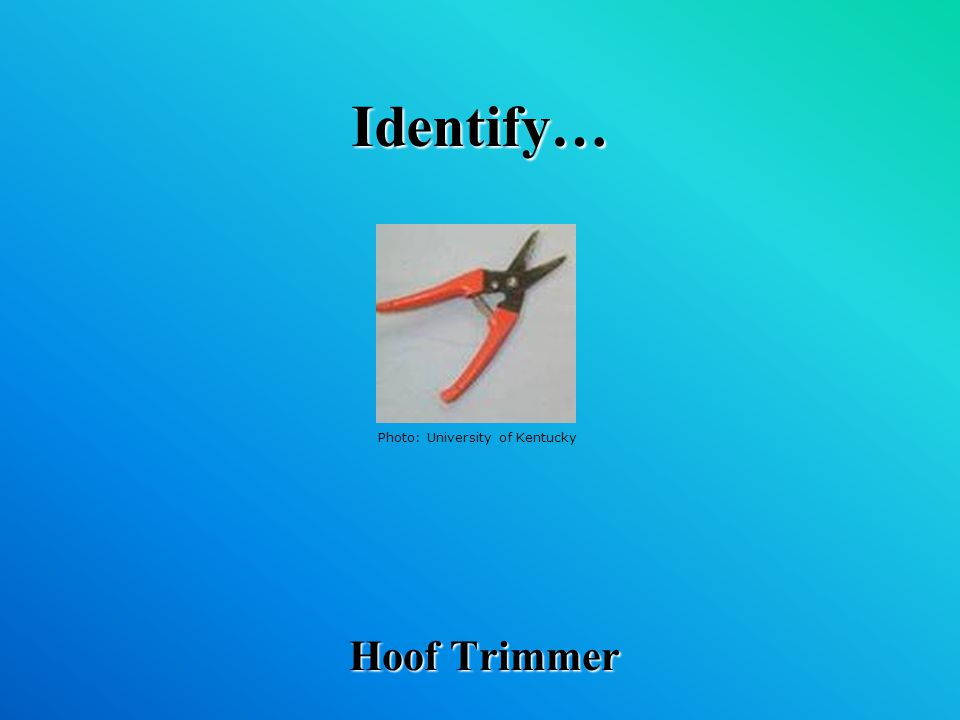 Identify… Hoof Trimmer Photo: University of Kentucky