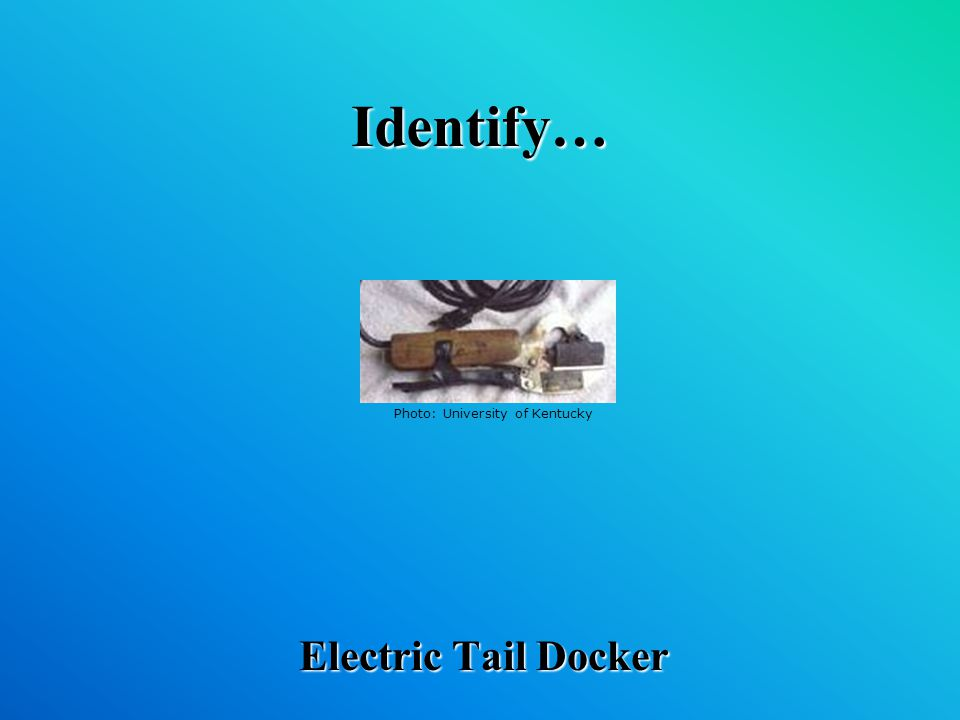 Identify… Electric Tail Docker Photo: University of Kentucky