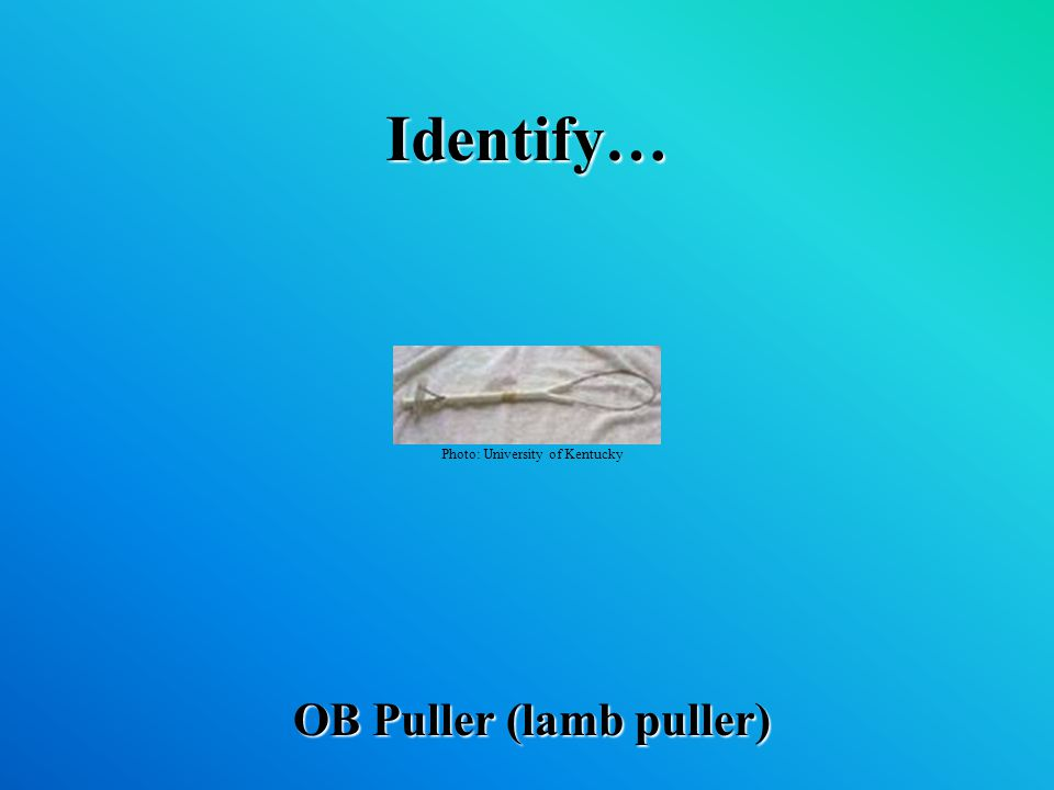 Identify… OB Puller (lamb puller) Photo: University of Kentucky