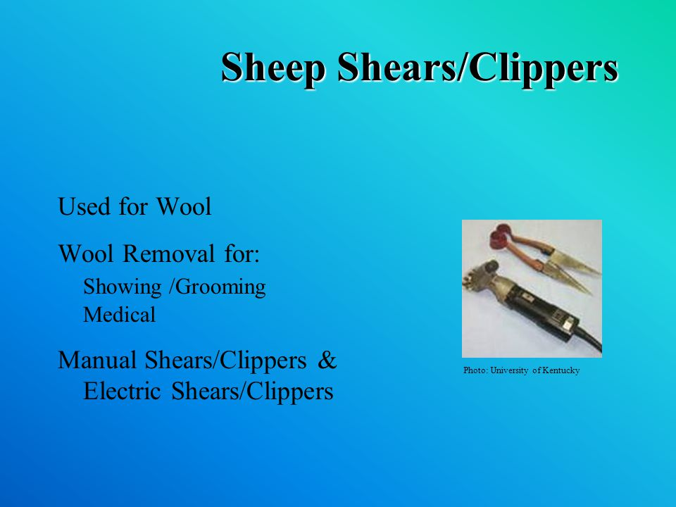 Sheep Shears/Clippers Used for Wool Wool Removal for: Showing /Grooming Medical Manual Shears/Clippers & Electric Shears/Clippers Photo: University of Kentucky