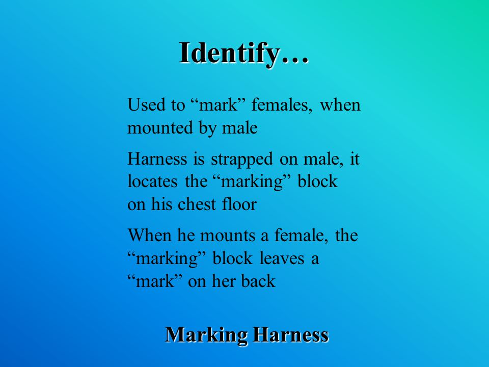 Identify… Marking Harness Used to mark females, when mounted by male Harness is strapped on male, it locates the marking block on his chest floor When he mounts a female, the marking block leaves a mark on her back