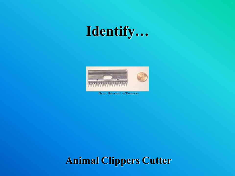 Identify… Animal Clippers Cutter Photo: University of Kentucky