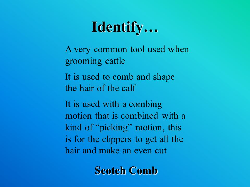 Identify… Scotch Comb A very common tool used when grooming cattle It is used to comb and shape the hair of the calf It is used with a combing motion that is combined with a kind of picking motion, this is for the clippers to get all the hair and make an even cut