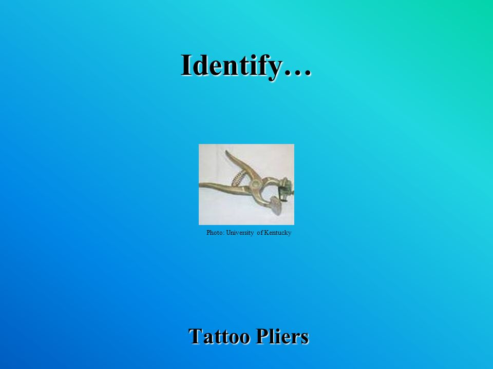 Identify… Tattoo Pliers Photo: University of Kentucky