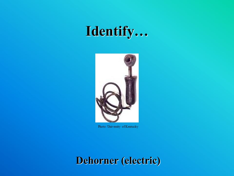Identify… Dehorner (electric) Photo: University of Kentucky