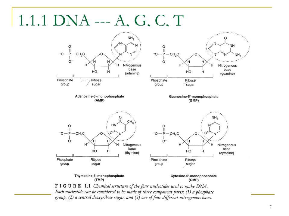 7 1.1.1 DNA --- A, G, C, T